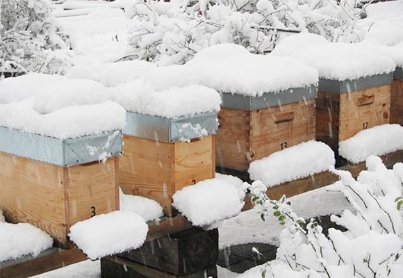 Imkerei Bienenhort Suderwich Recklinghausen – Bienenstöcke im Winter