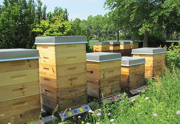 Imkerei Bienenhort Suderwich Recklinghausen – Bienenstöcke