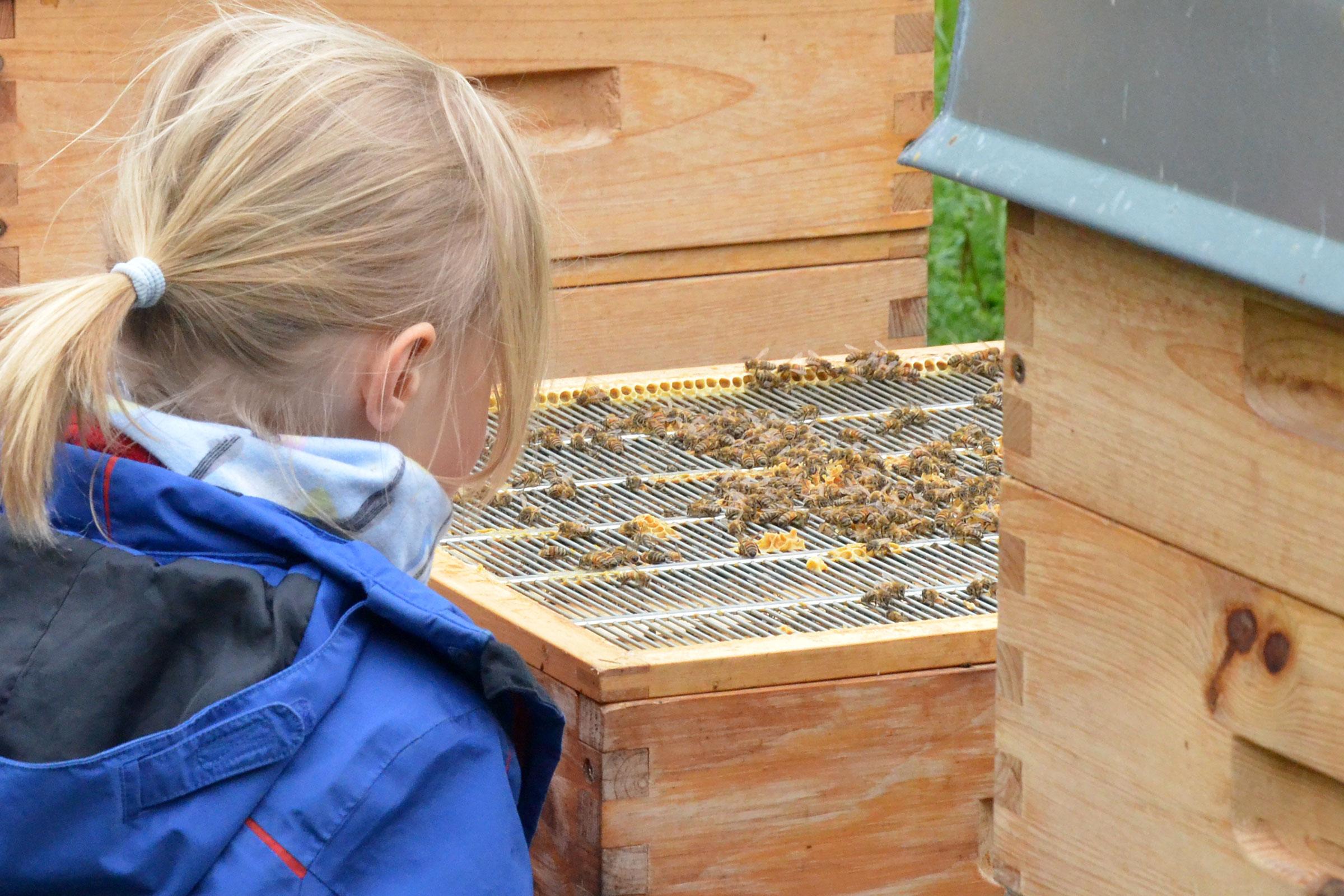 KITA-Gruppe RE-Kids des SBNH zu Besuch in der Imkerei Bienenhort Suderwich
