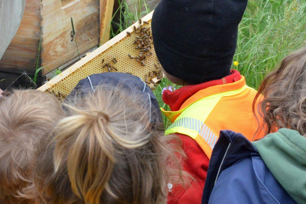 KITA-Gruppe RE-Kids des SBNH zu Besuch im Bienenhort Suderwich