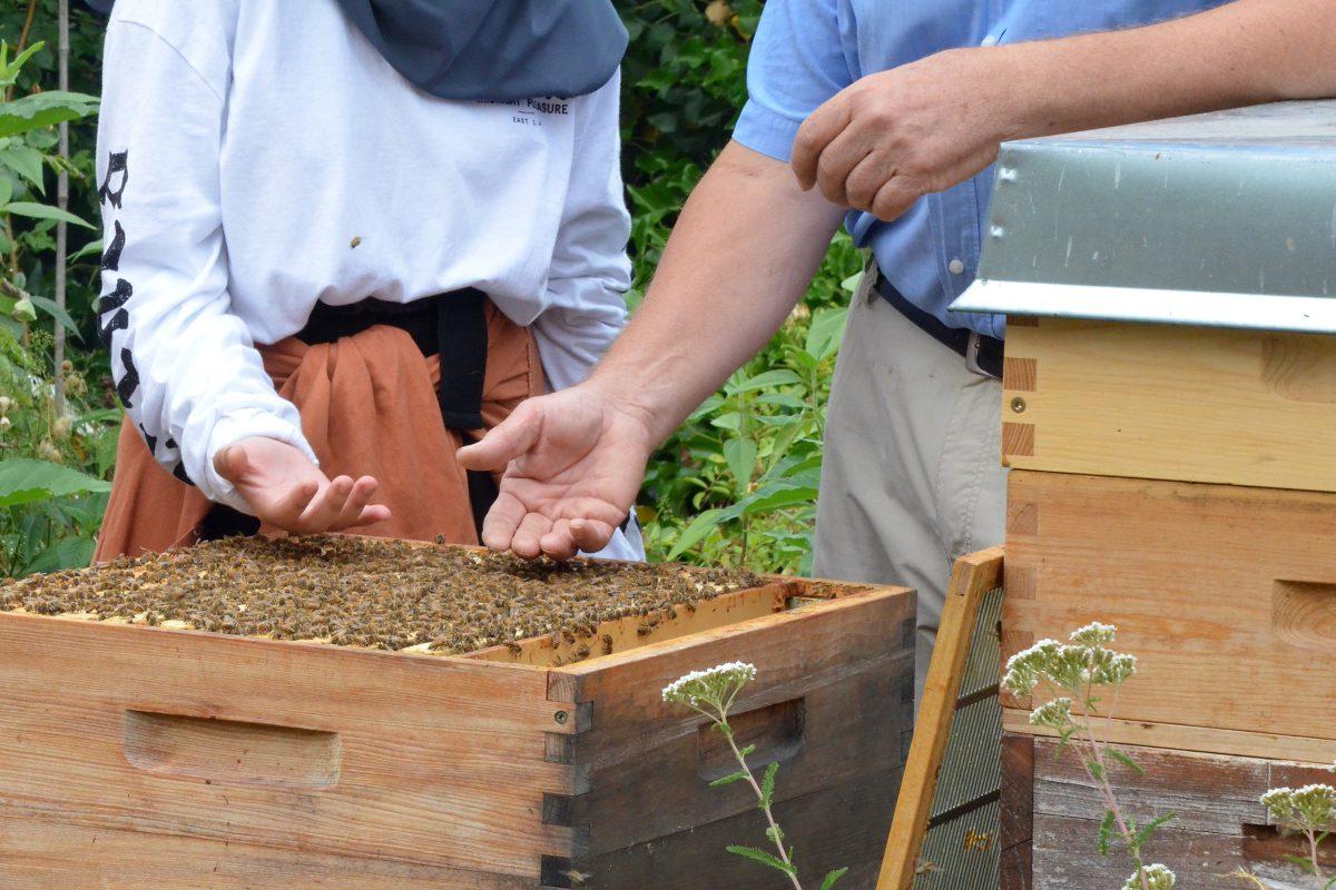 Bienenstock im Bienenhort Suderwich