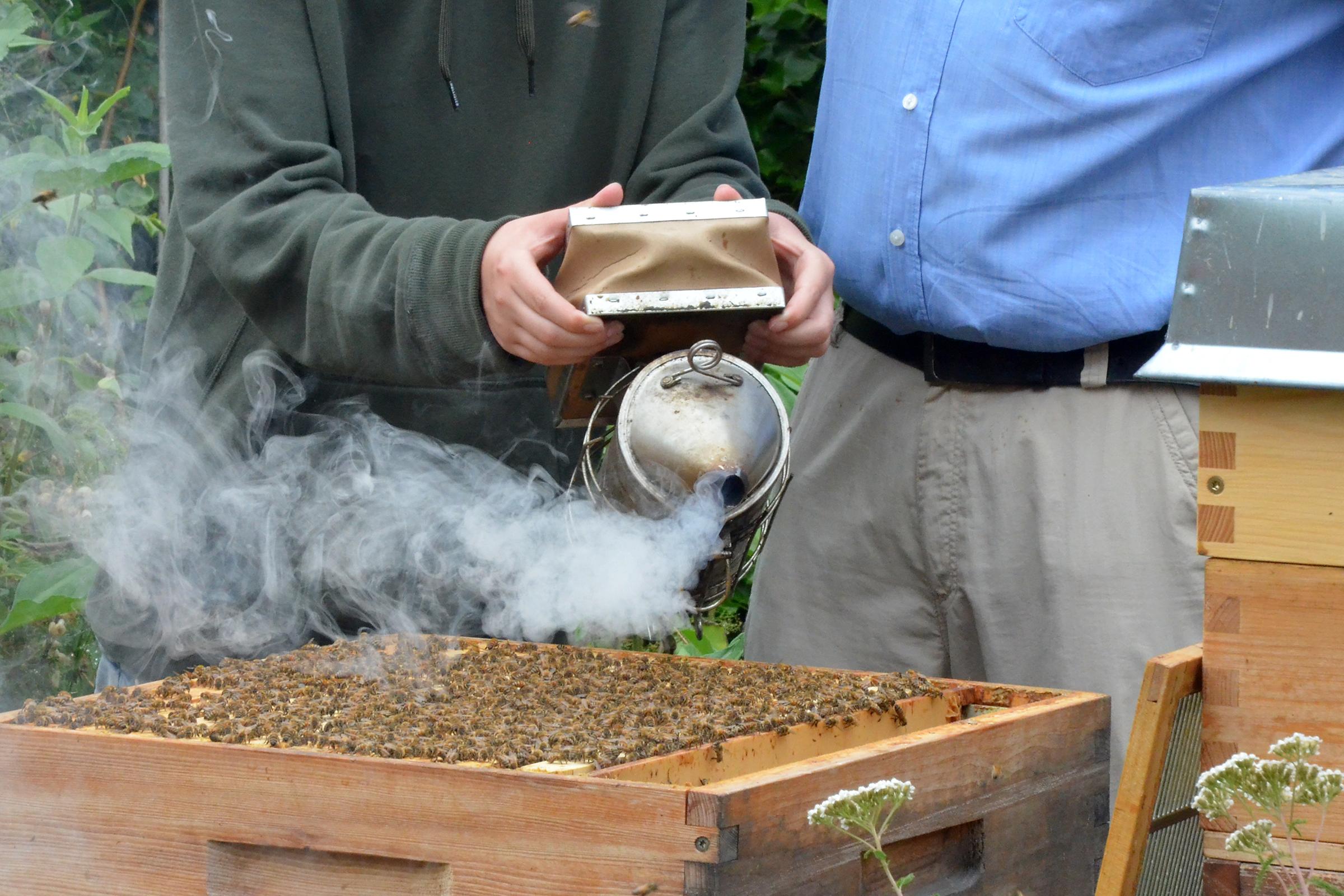 Bienenstock in der Imkerei Bienenhort Suderwich Recklinghausen