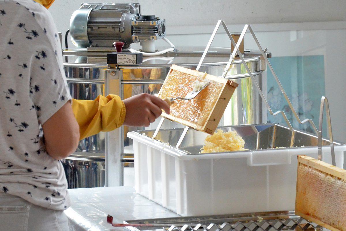 Honigwaben entdeckeln im Bienenhort Suderwich