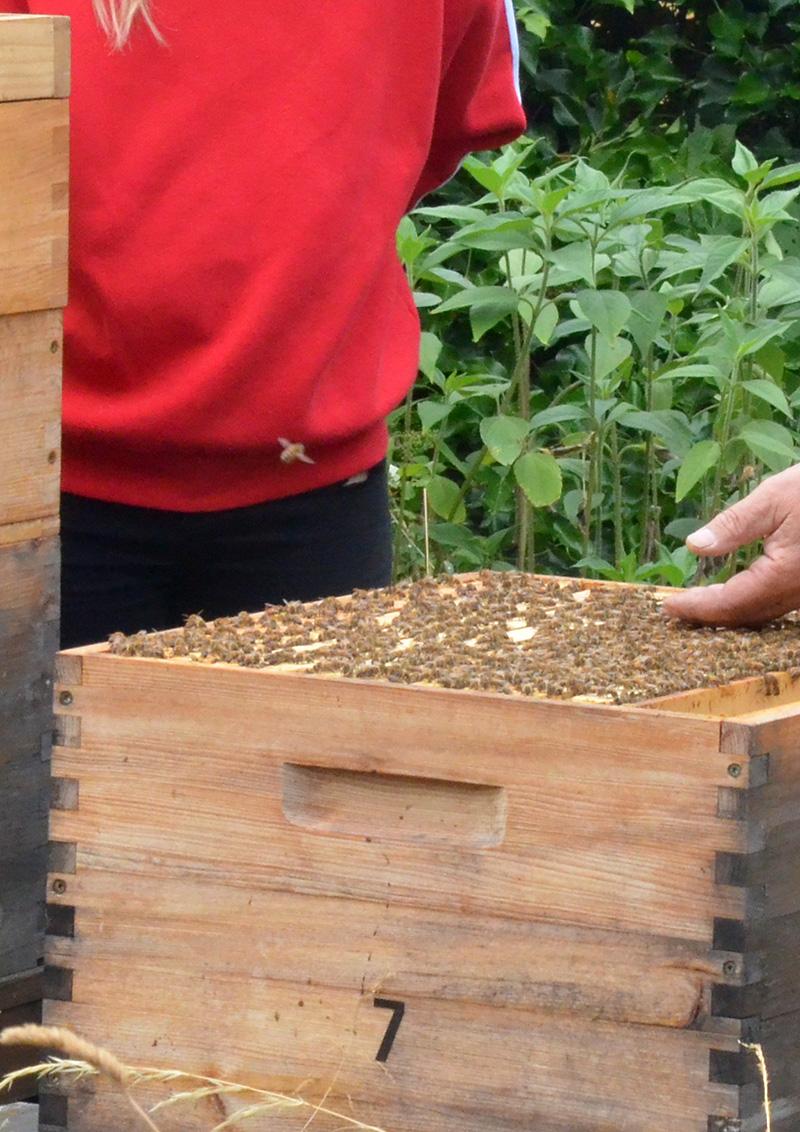 Imkereibesuch im Bienenhort Suderwich