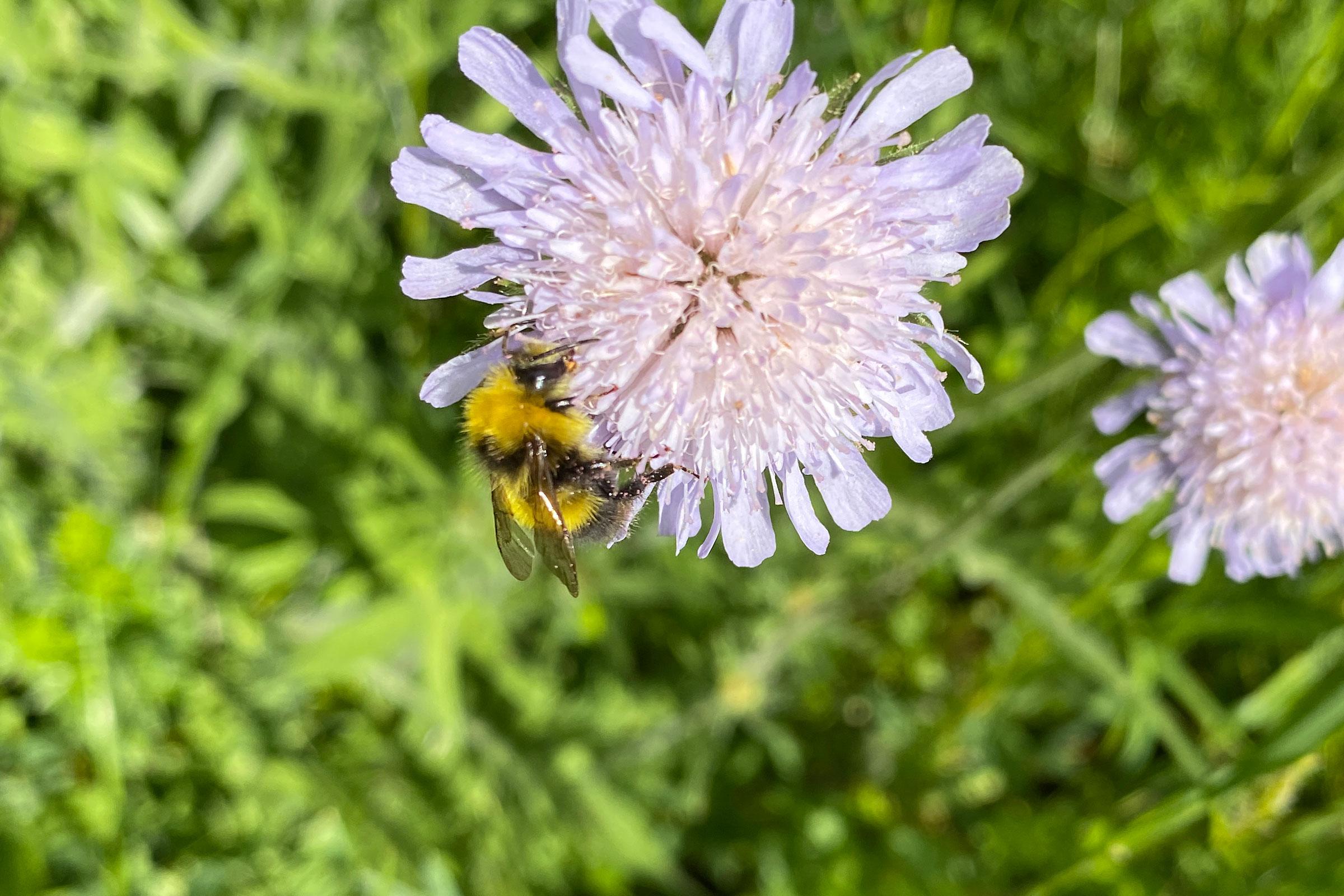 Imkerei Bienenhort Suderwich Recklinghausen Hummeln
